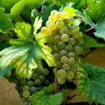 wine-63931_1280